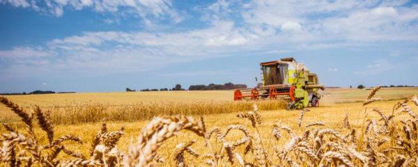 céréales agricoles
